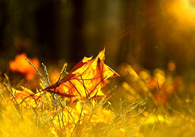 Podzimní paprsky